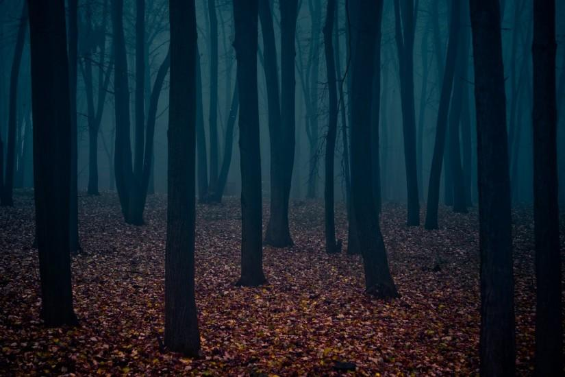 nature trees autumn forests leaves fog Gothic atmospheric
