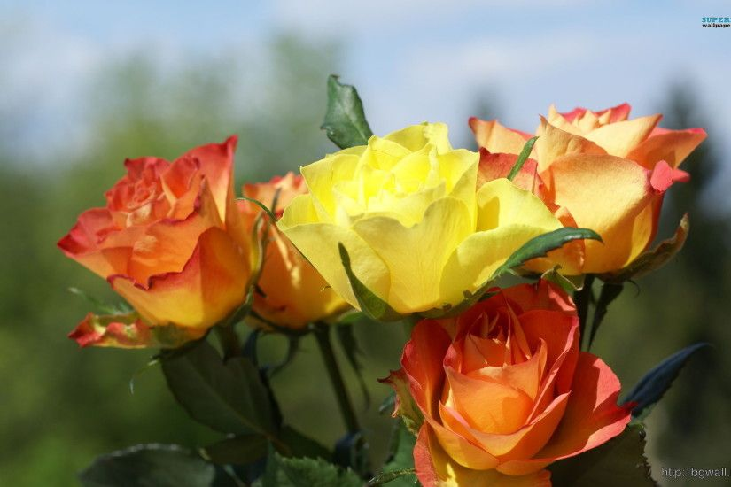 Things You Won't Believe About Roses | The Floral Life | roses .