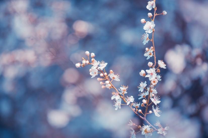 Flower Background Tumblr 183 ① Download Free Stunning
