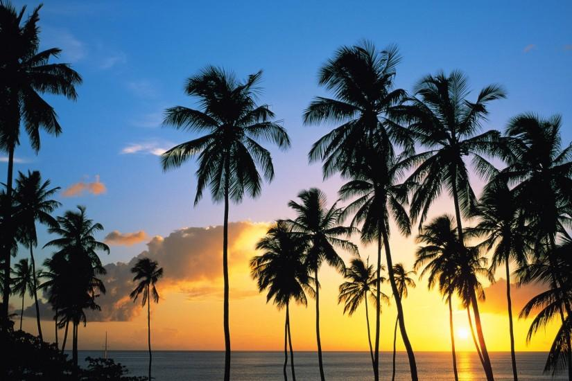 Photos Download Palm Tree Backgrounds.