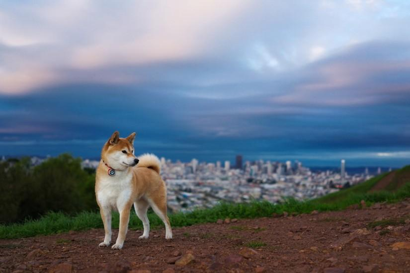 doge wallpaper 1920x1200 for ipad 2