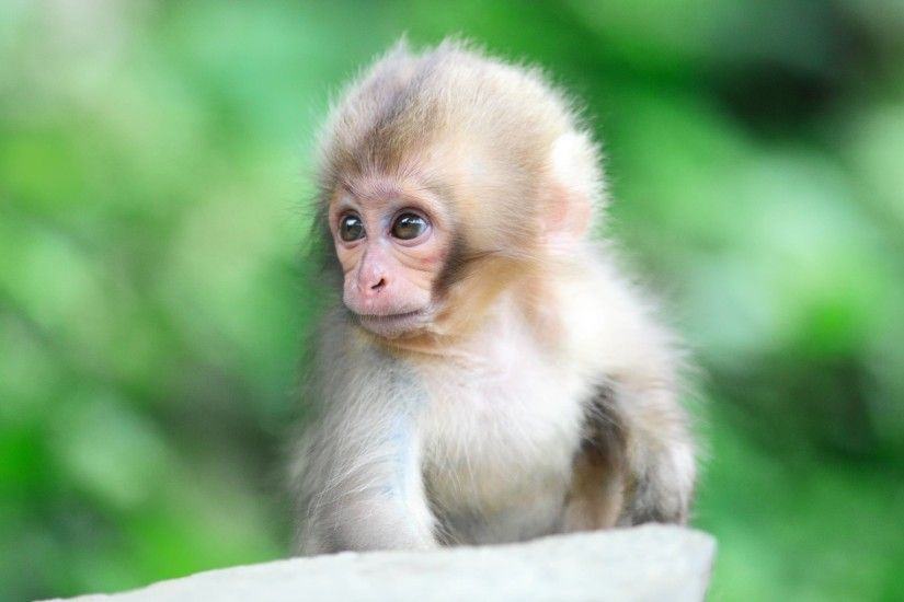 Wallpapers For > Cute Monkey Wallpapers