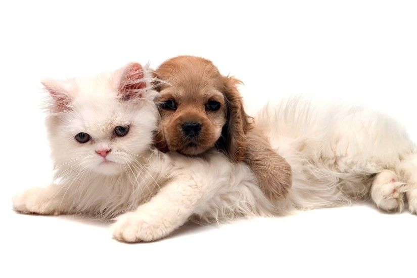 Two Cute Friends Cat And Dog Animal Wallpapers