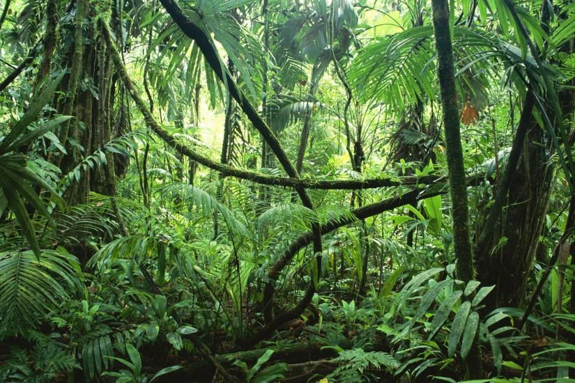 best jungle background 1920x1200 for mac