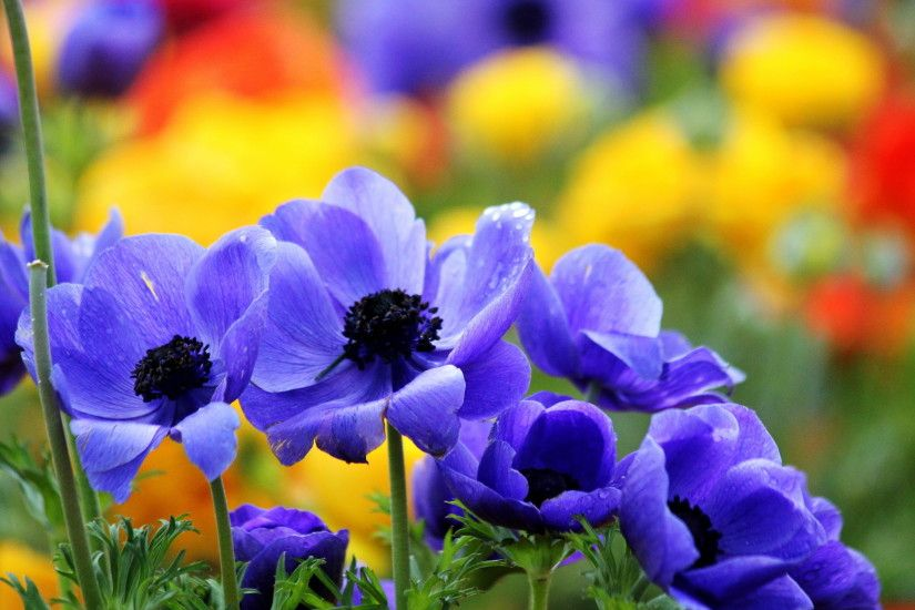 pretty flowers background #594089, flowers Photography Wallpapers