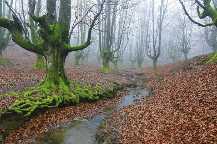 Preview wallpaper forest, trees, river, fog, landscape 3840x2160