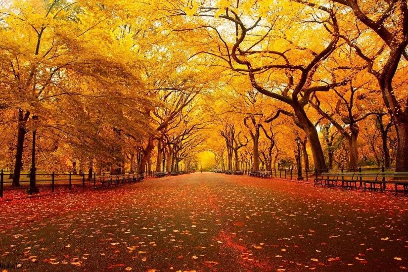 autumn background pictures