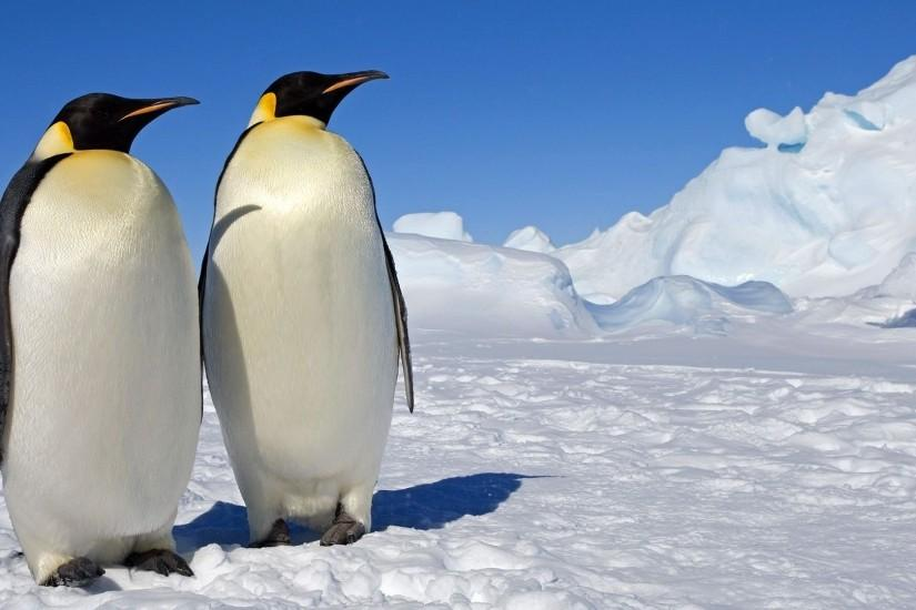 Emperor penguins Widescreen Wallpaper - #4867