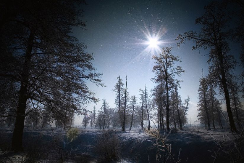 Flakes winter snow night moon light landscapes trees forest wallpaper |  1920x1200 | 41476 | WallpaperUP