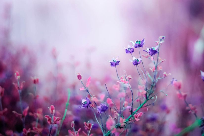 flower wallpapers download