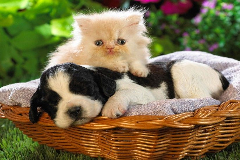 Cat And Dog Wallpapers High Quality | Download Free