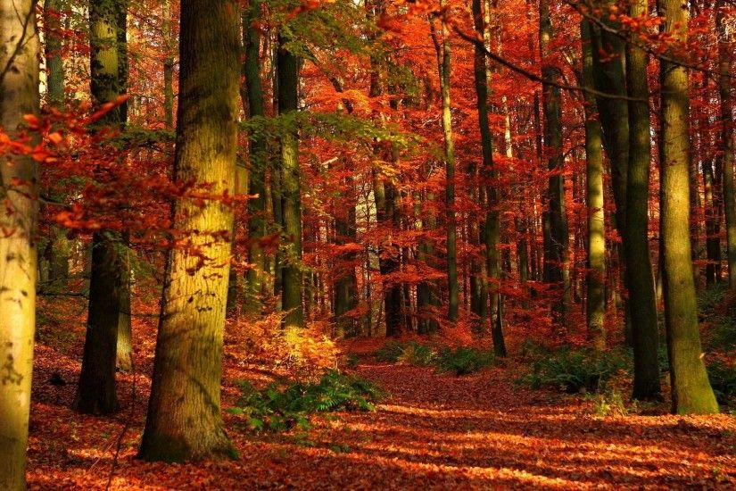 Preview wallpaper autumn, wood, leaves, trees, red, gleams 1920x1080