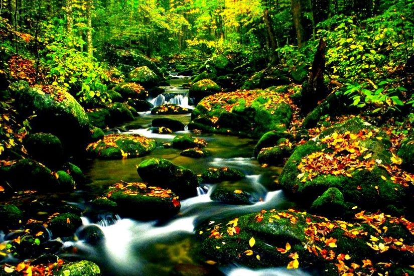 forests water nature colors woods trees lovely beautiful fall river  wallpapers[1920x1080]