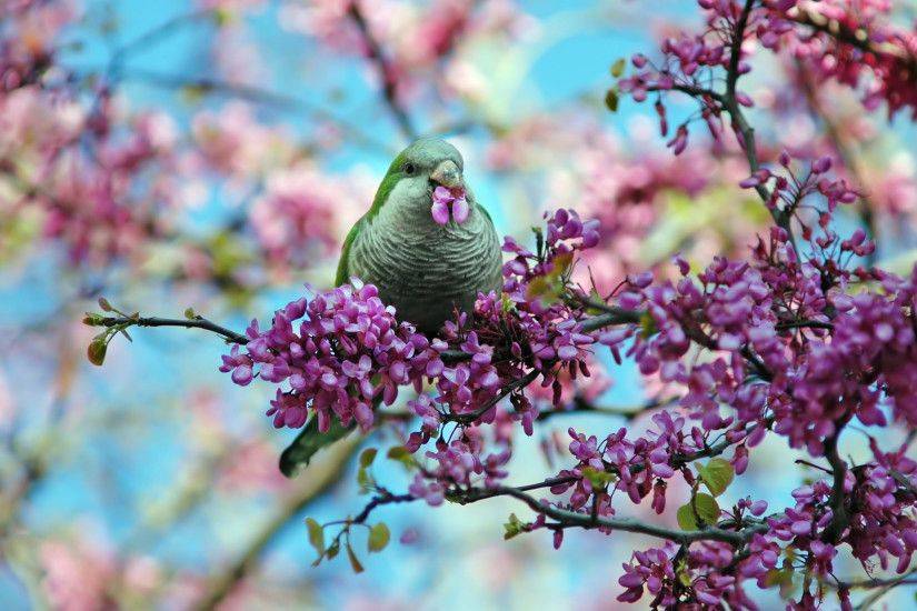 Beautiful Spring Wallpapers Desktop - WallpaperSafari Beautiful Spring  images download | PixelsTalk.
