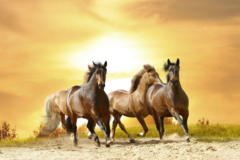 Horses: Horse Animals Stallion Wild Cool Wallpapers for HD 16:9 .
