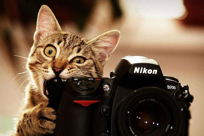 hd pics photos cute photographer cat funny hd quality desktop background  wallpaper