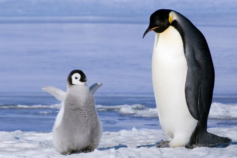 Cute Penguin Wallpapers Photo