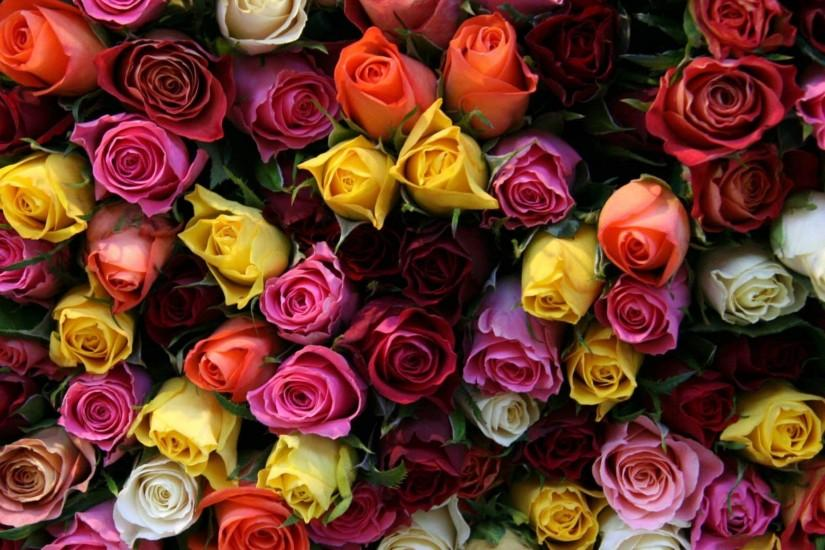 most popular roses wallpaper 2560x1600 for phone