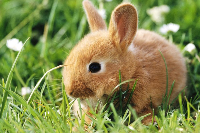 Cute brown bunny
