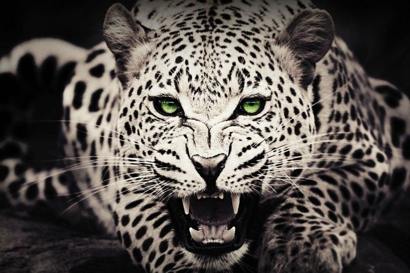 Cool Wild Animal Wallpapers Images