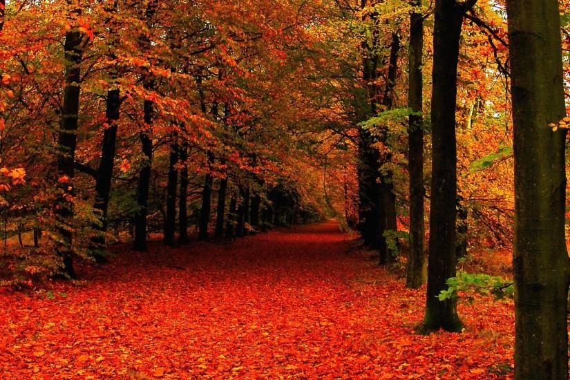 Autumn Leaves Wallpapers Mobile with High Resolution Wallpaper 1920x1080 px  919.52 KB Nature Rain Wallpaper Fall