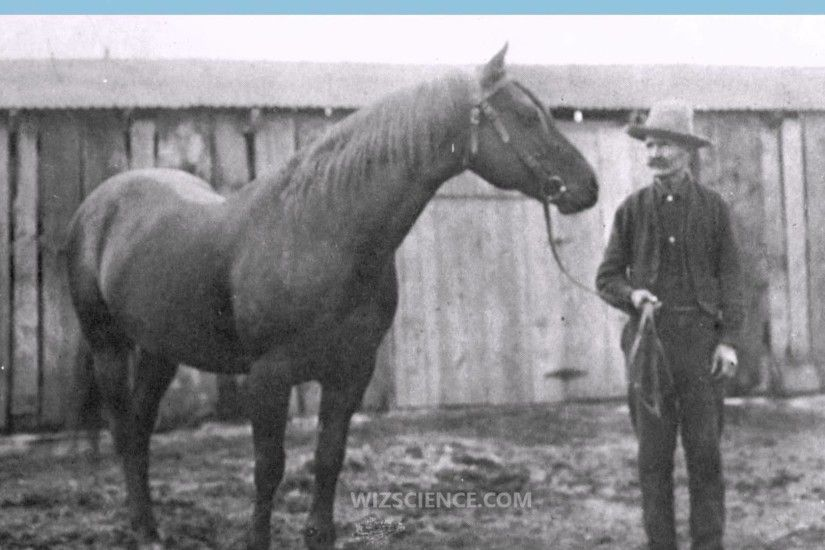 American Quarter Horse - Video Learning - WizScience.com