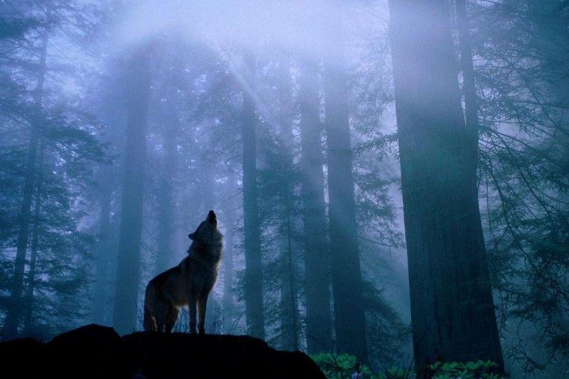 Wolf Wallpaper Full HD