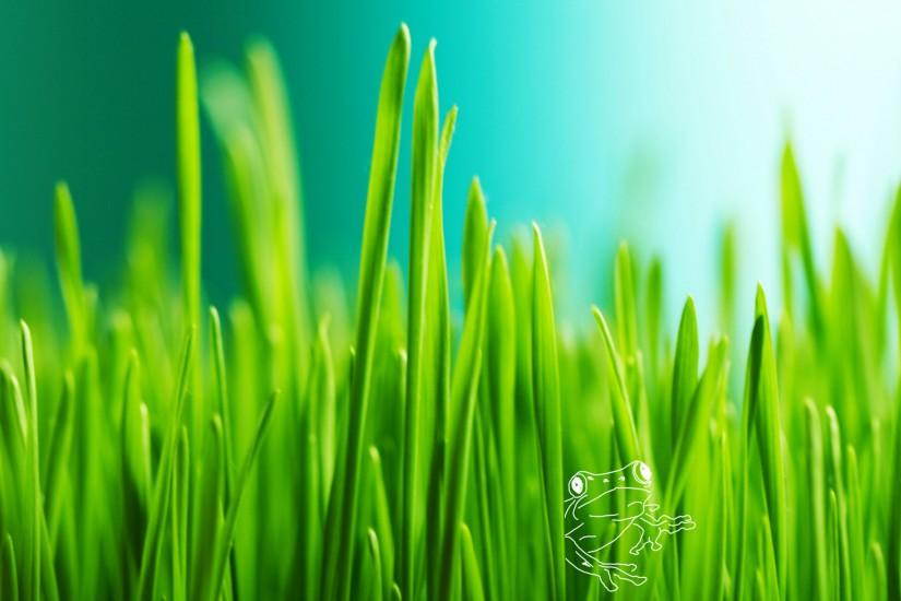 vertical grass wallpaper 2560x1600 full hd
