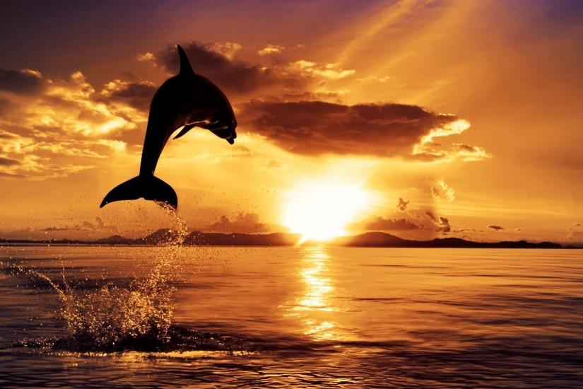 Dolphin Desktop Backgrounds Picture, Wallpapers, HD Wallpapers .