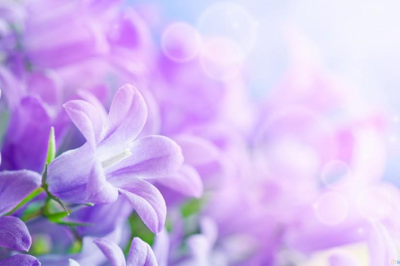free download flowers background 2560x1600