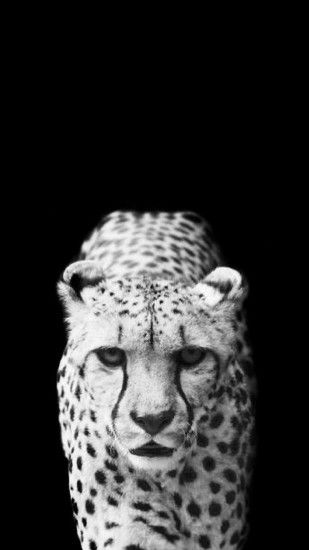 2560x1600 Animals wildlife monochrome jaguars | HD Wallpapers