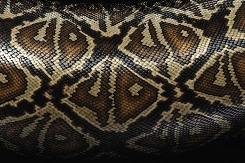 1920x1080 Wallpaper snake, scales, patterns, texture