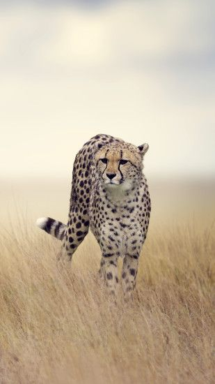 Black Cheetah Wallpapers Wallpaper × Cheetah Images 1080×1920