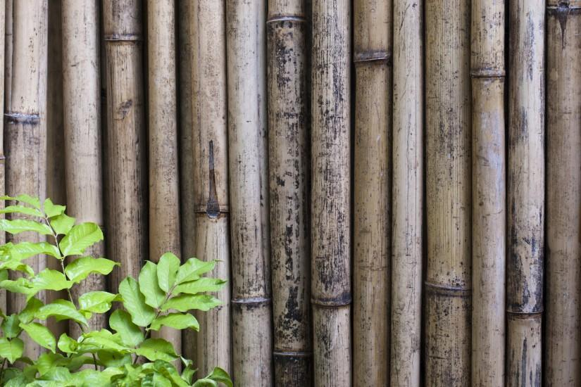 new bamboo background 3200x2142 free download
