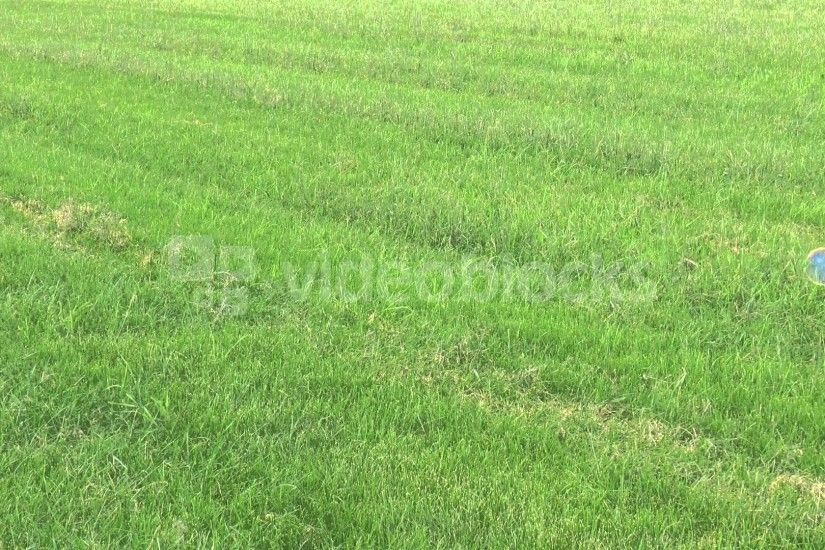 grass field background. soap bubbles floating on green grass field  background n195qpkeg wl u