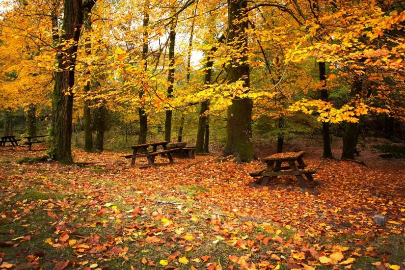 2880x1800 Wallpaper leaf fall, autumn, benches, picnic, october, cold,  emptiness