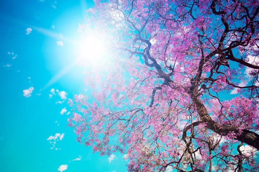 Description: The Wallpaper above is Spring Blossom Sunshine Wallpaper in  Resolution 2560x1600. Choose your Resolution and Download Spring Blossom  Sunshine ...