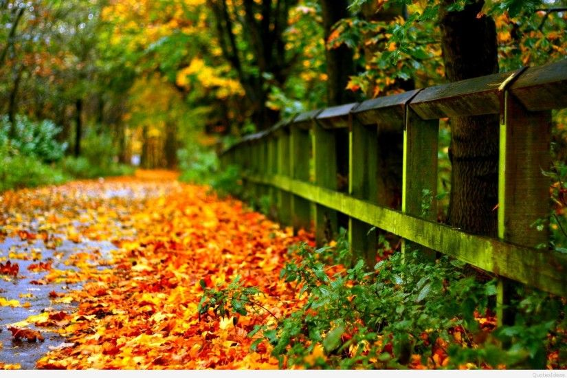 ... autumn-leaves-on-road-hd-for-desktop-widescreen- ...
