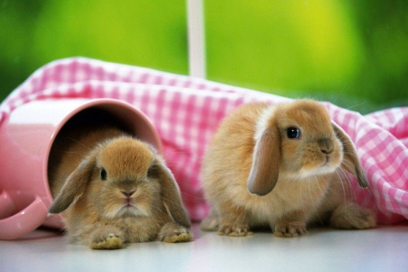 Cute Bunnies Wallpaper HD #20512 Wallpaper | HDwallsize.