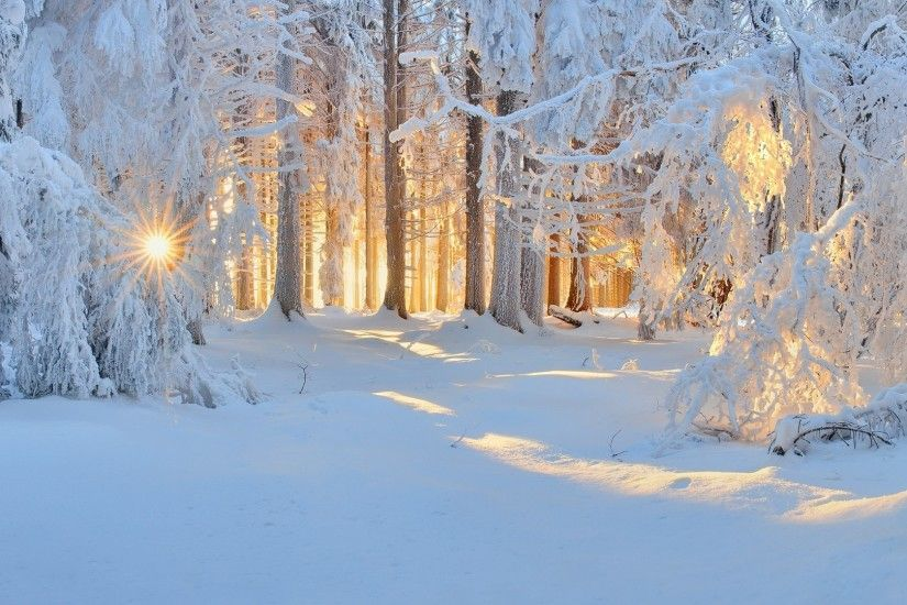 sunrise, Winter, Nature, Forest, Snow, Landscape, Trees, Sun Rays, White,  Cold, Sunlight, Frost Wallpapers HD / Desktop and Mobile Backgrounds