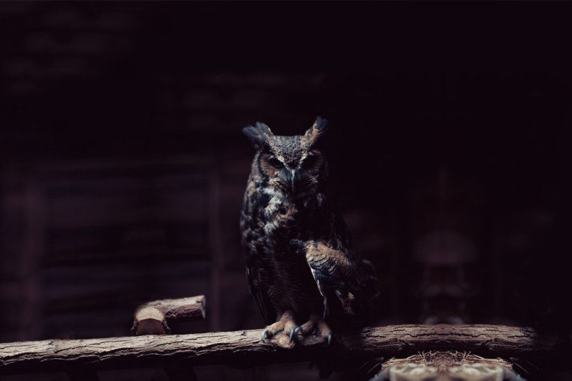 574KiB, 1920x1200, 7014983-owl-night.jpg