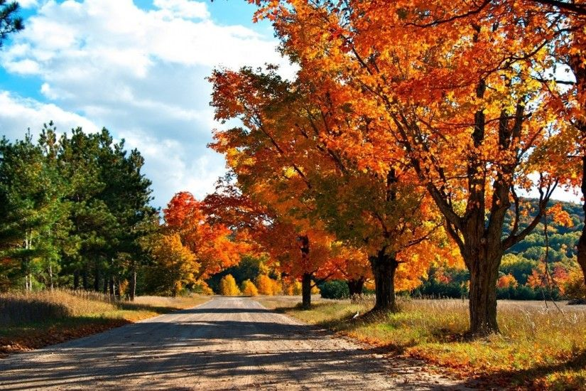 Preview wallpaper autumn, road, trees, leaves, yellow, shades 1920x1080