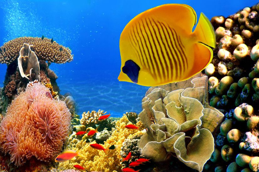 Tropical Fish Coral Reef Wallpapers