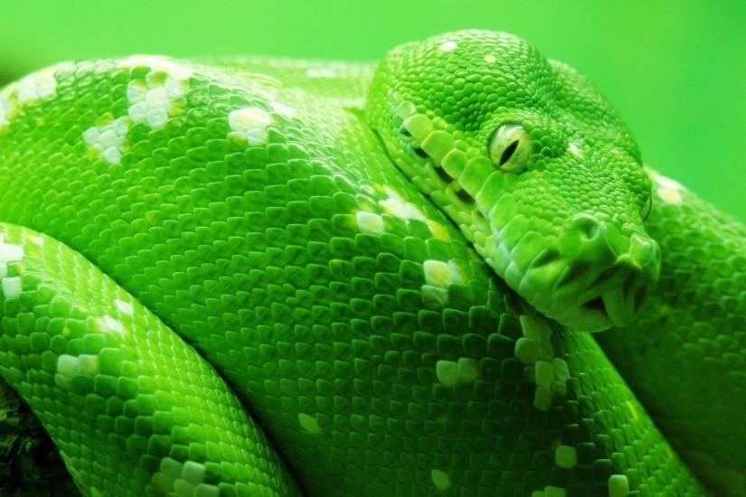 Cool Hd Green Snake Wallpaper | Download wallpapers page