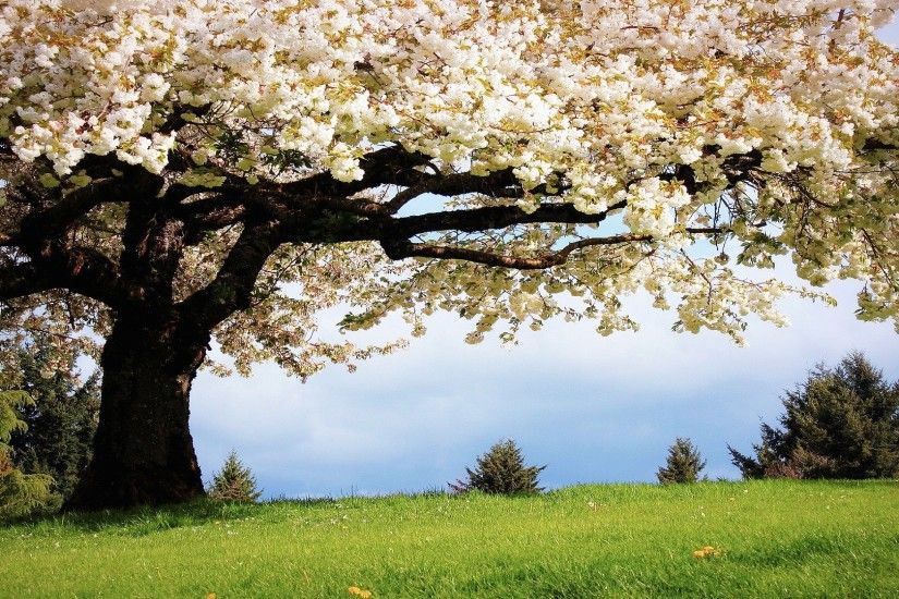 Spring Season HD Wallpapers Free Download