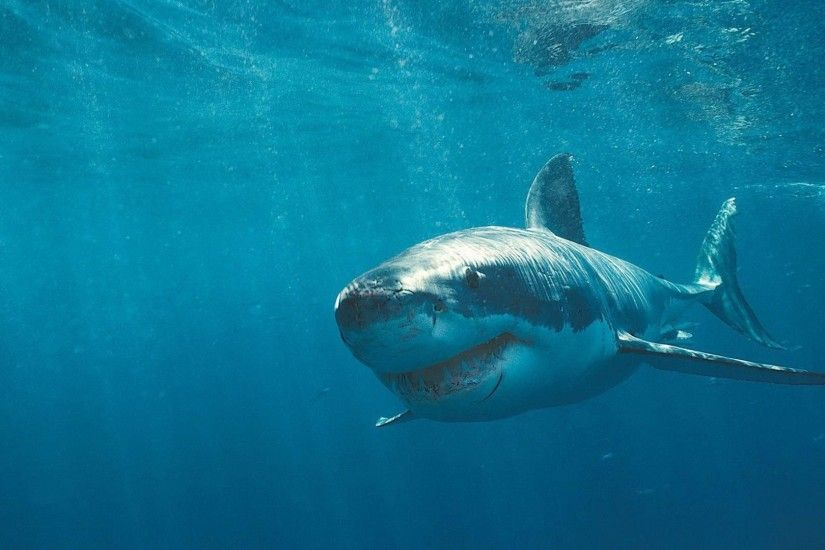 Ocean Great White Shark wallpaper download