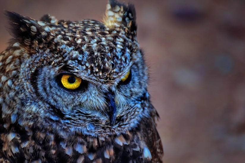 owl wallpaper 1920x1200 photo
