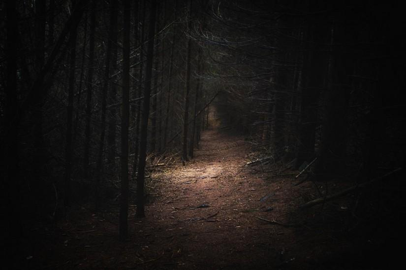 beautiful dark forest background 1920x1200 download free