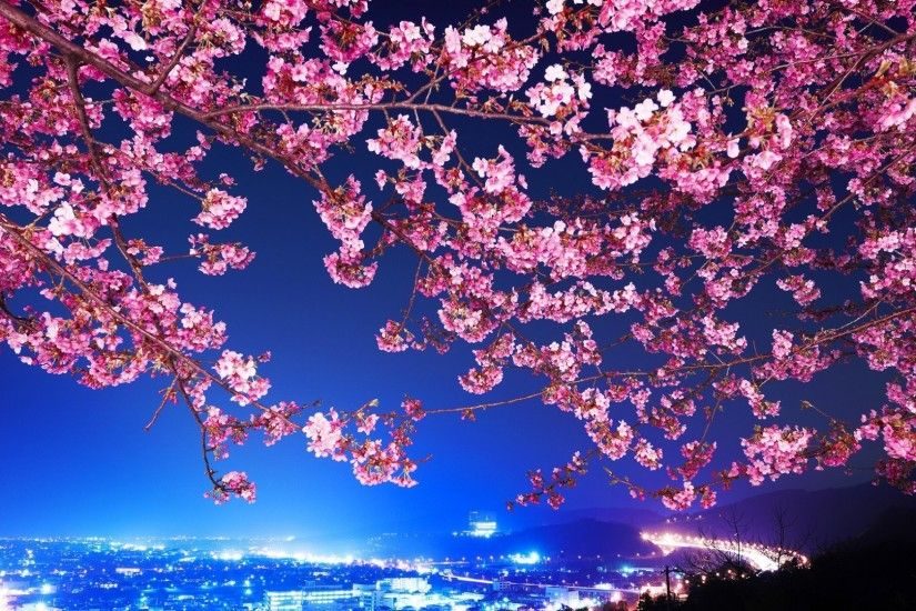 flowers, Cityscape, Tokyo, Cherry Blossom Wallpaper HD