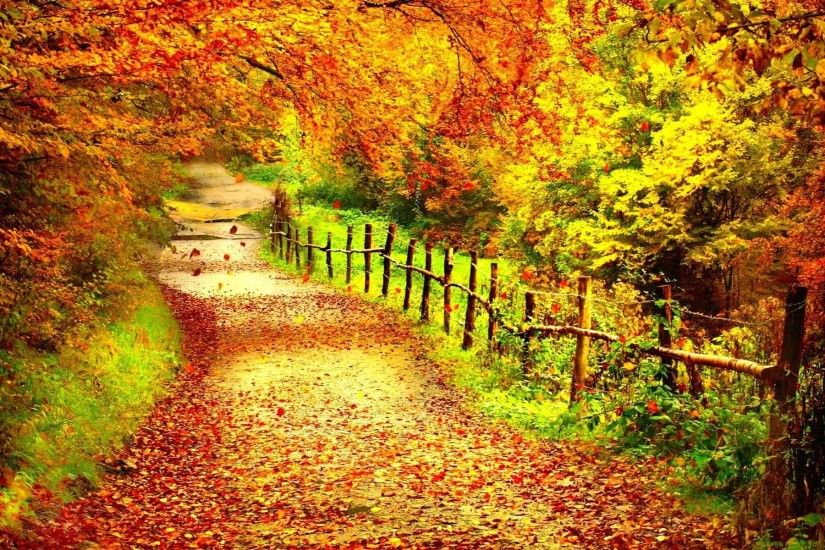 Trees Forest Season Color Fall Landscape Nature Autumn Tree HD New Wallpaper